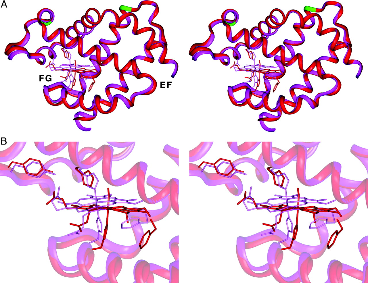 Stereo diagrams of the structures of NgbCO (red) and unligated metNgb (magenta) in ribbon representation.